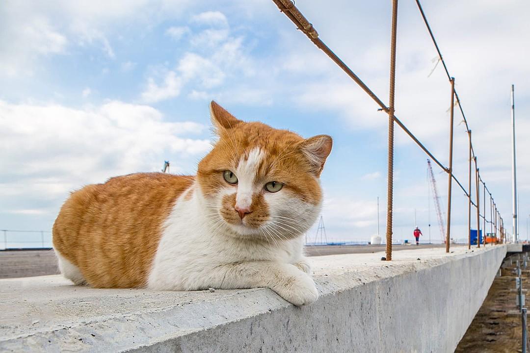Главная звезда Крымского моста
