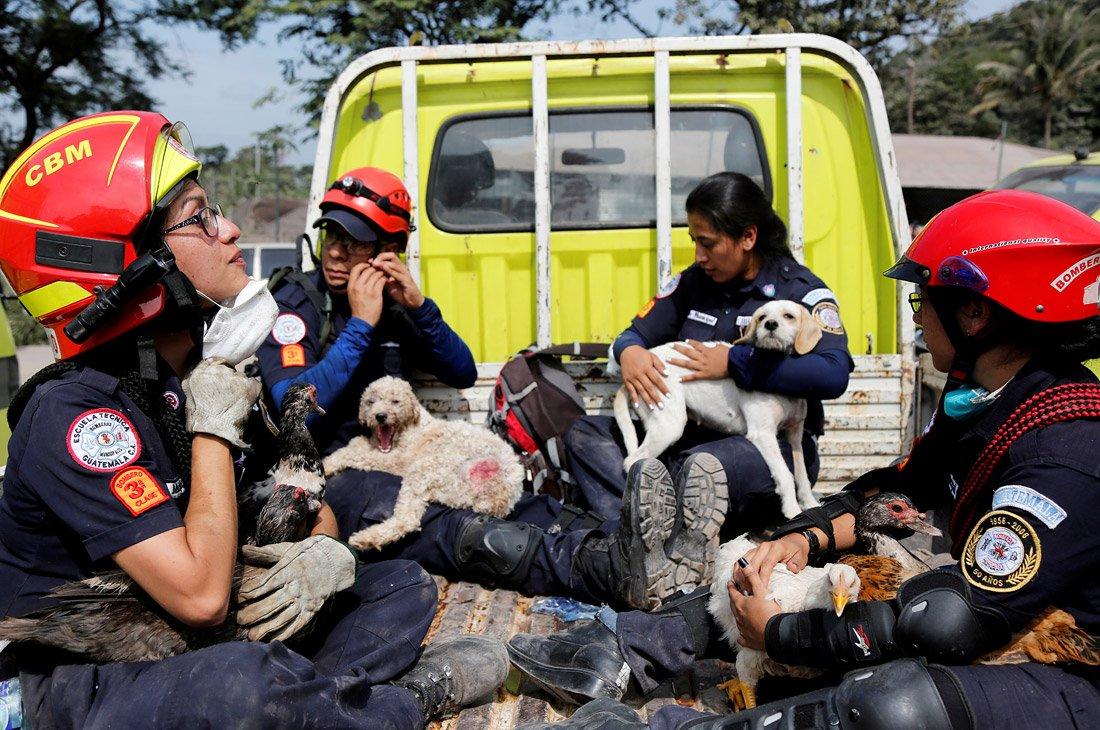 Спасенные от вулкана собаки в Гватемале