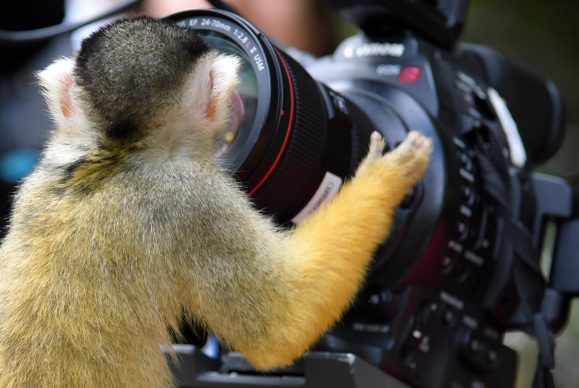 Фотографа заказывали?