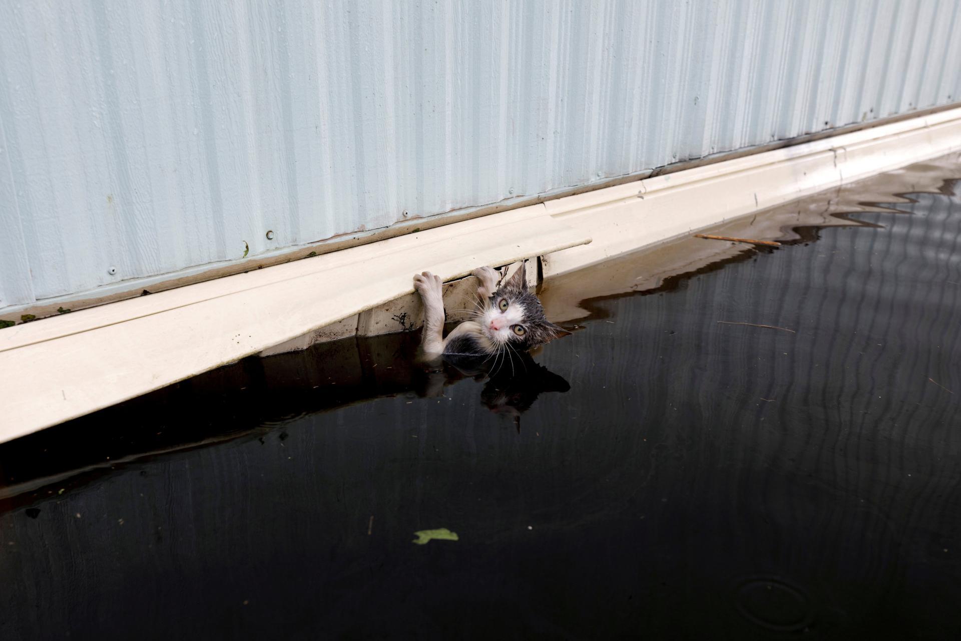 Кота спасают после наводнения в Северной Каролине