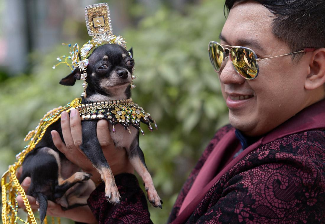 Главный герой филиппинского дня животных
