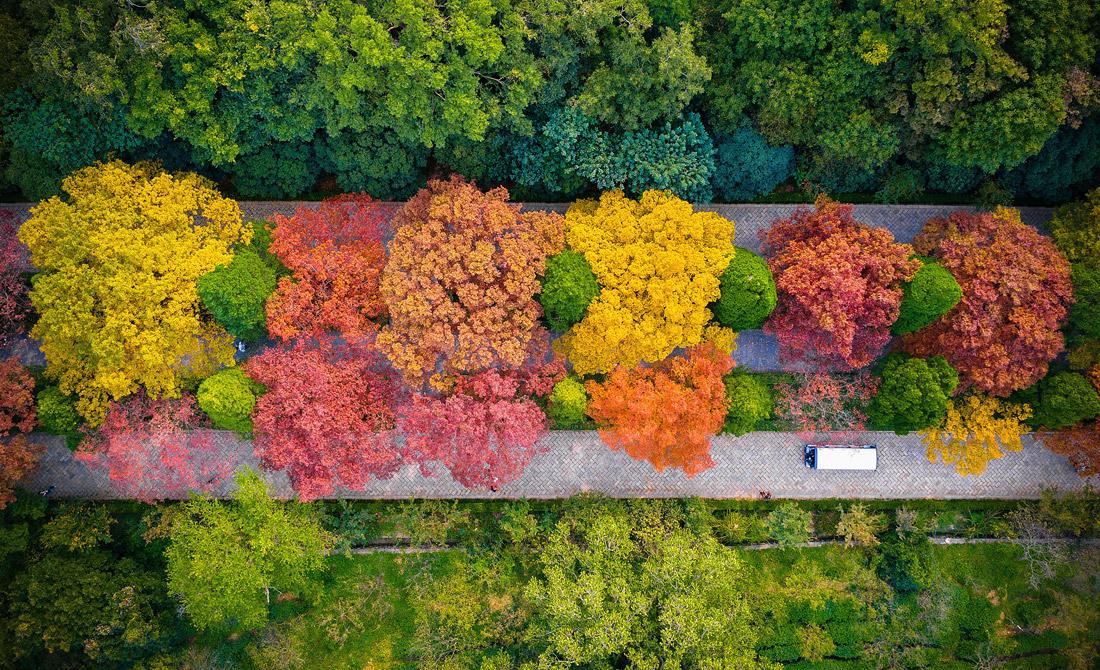 Цветочная осень в китайской провинции