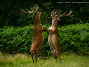 Comedy Wildlife Photo15