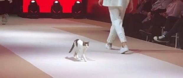 Турецкая кошка показала как правильно ходить по подиуму
