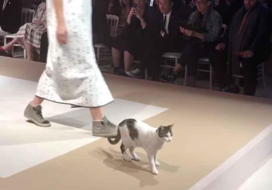 catwalk2