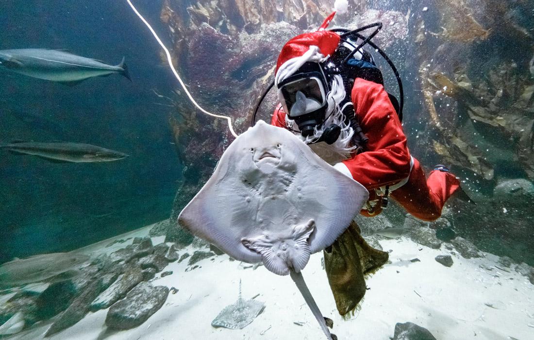 К обитателям аквариума немецкого города Тённинг  уже пришел Санта Клаус