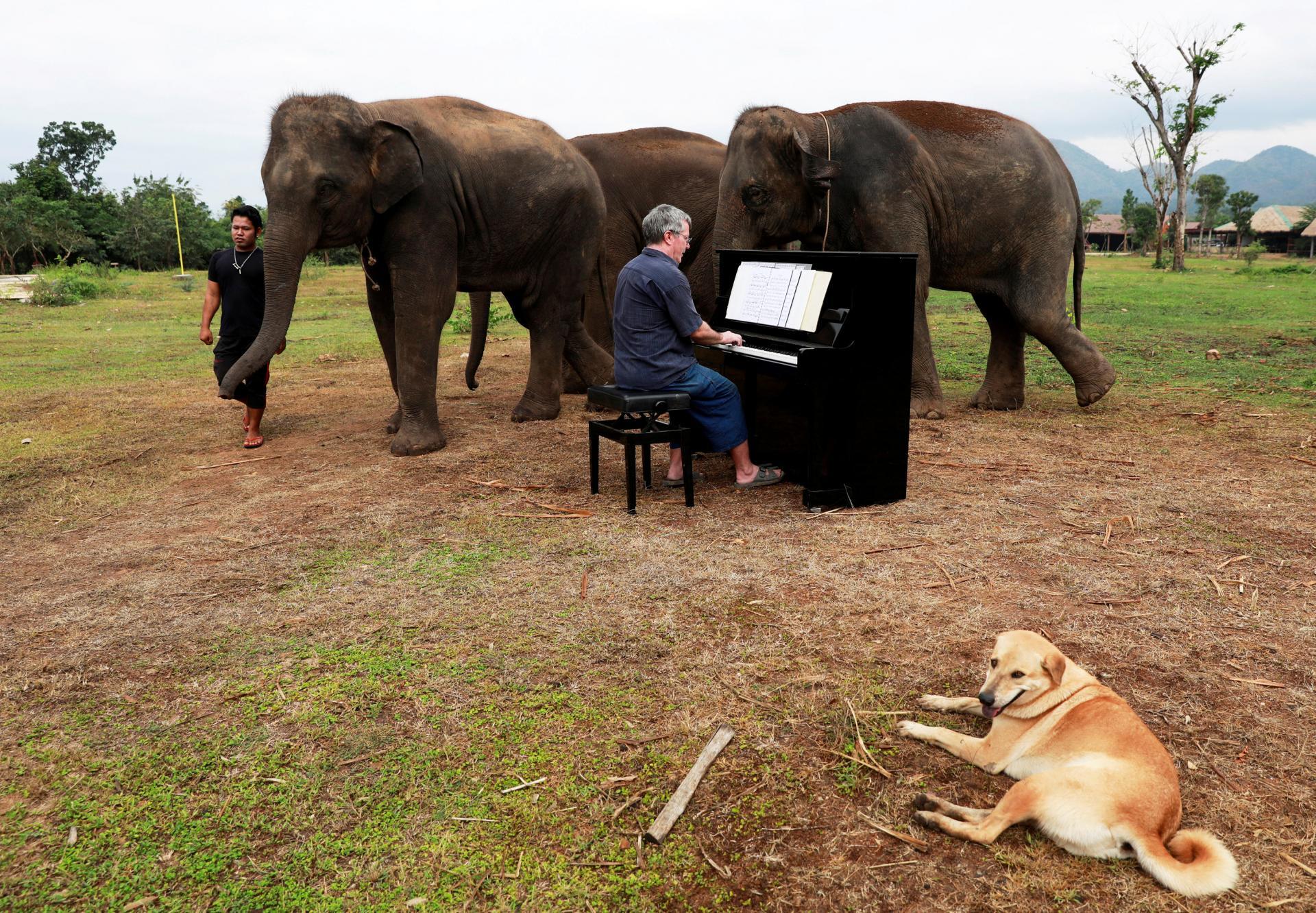 Музыкальная терапия для слонов