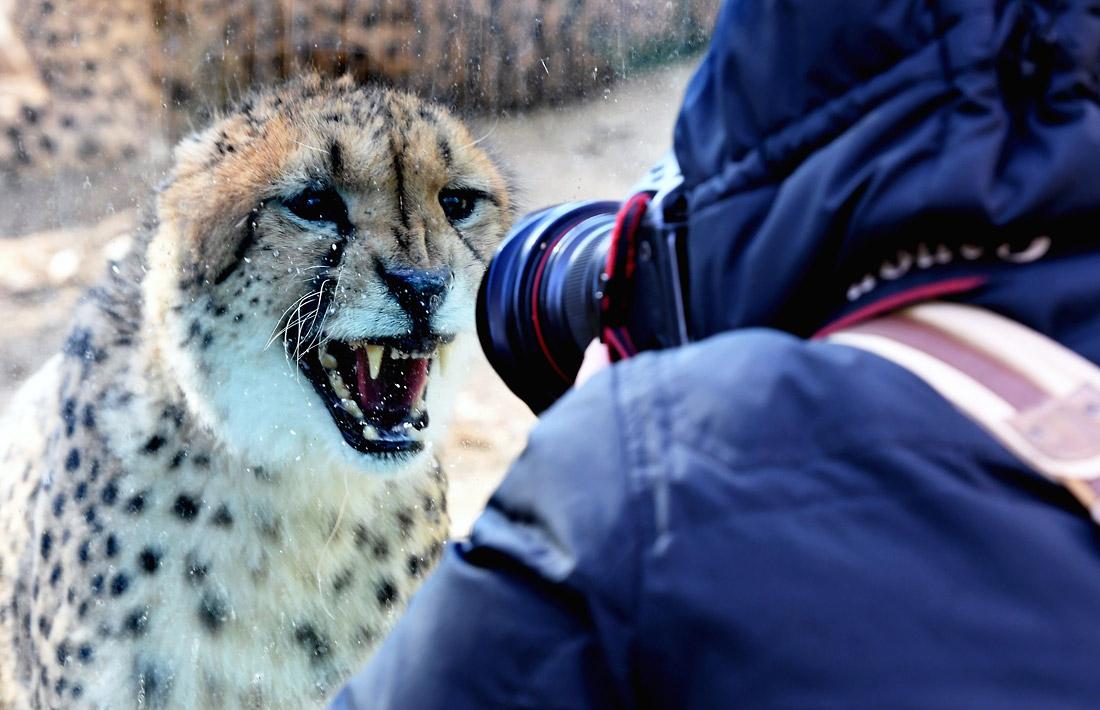 Подготовка  новогоднего образа  в зоопарке Чжэнчжоу
