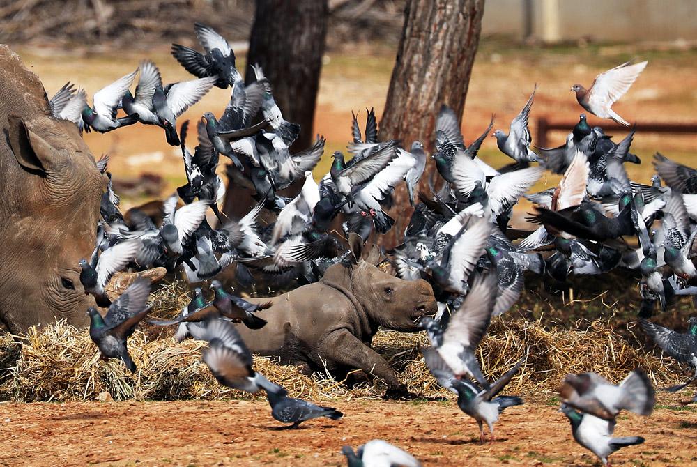 Забавные развлечения в зооцентре в Рамат-Гане
