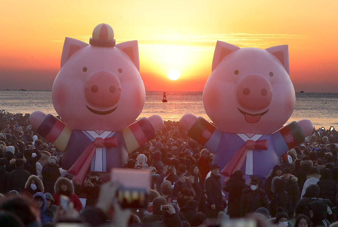 Встреча свиней в Южной Корее