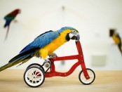 parrot ride a bike