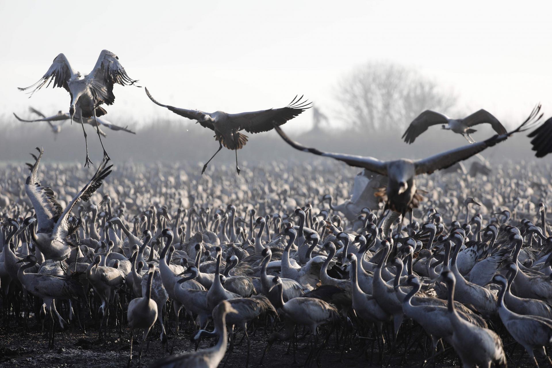 50000 птиц решили не париться и не лететь в Африку на зимовку, а остались в Израиле