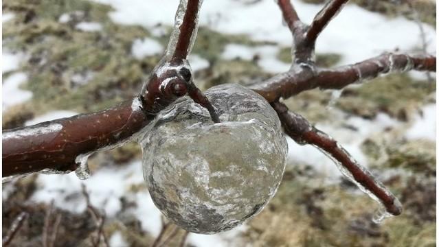 Ледяные яблоки