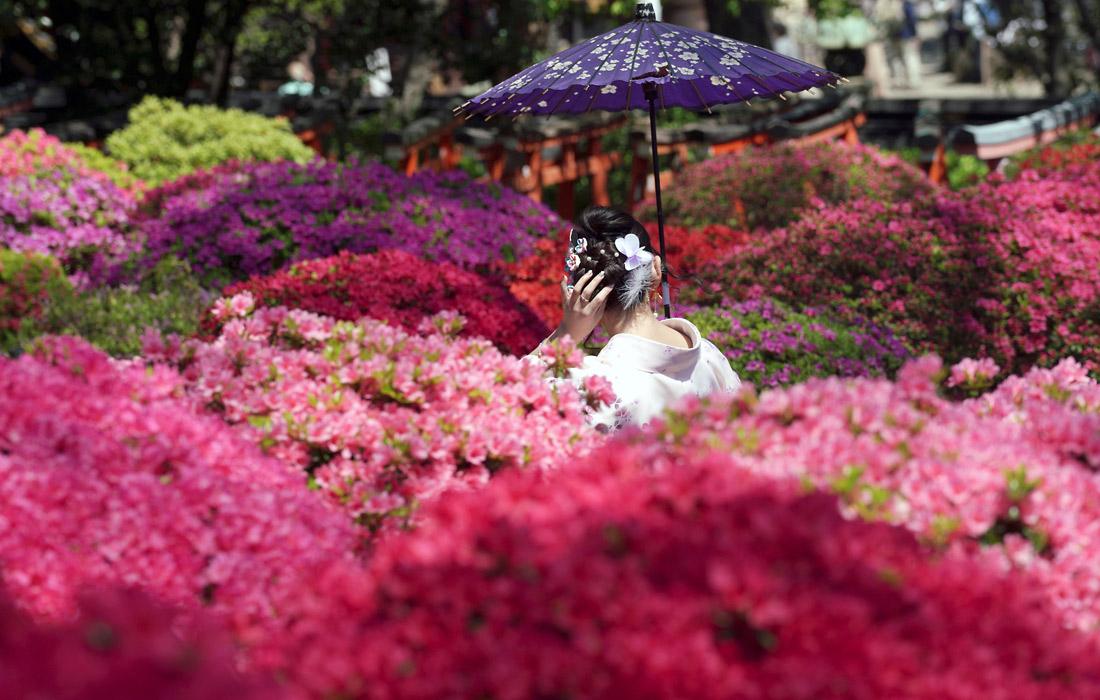 В Японии начался сезон цветения азалии
