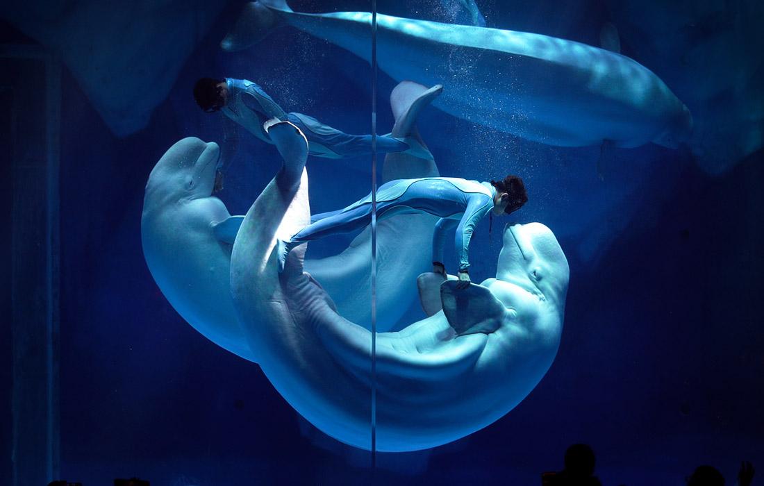 И с китами можно танцевать - в океанариуме Шанхая