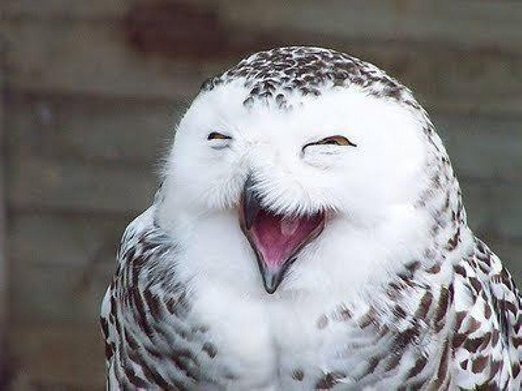 С днем смеха вас!