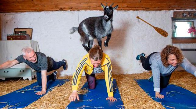 фитнес с козлятами