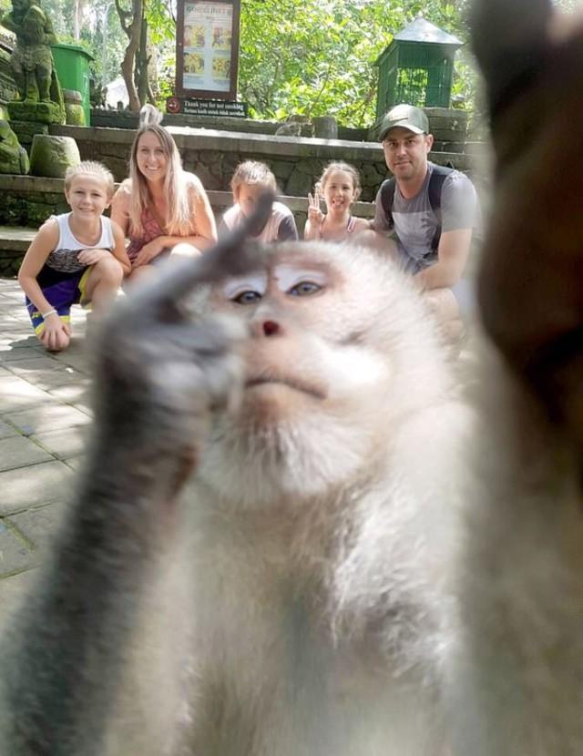 обезьяна сделала неприличное селфи