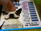 lottery lucky dog