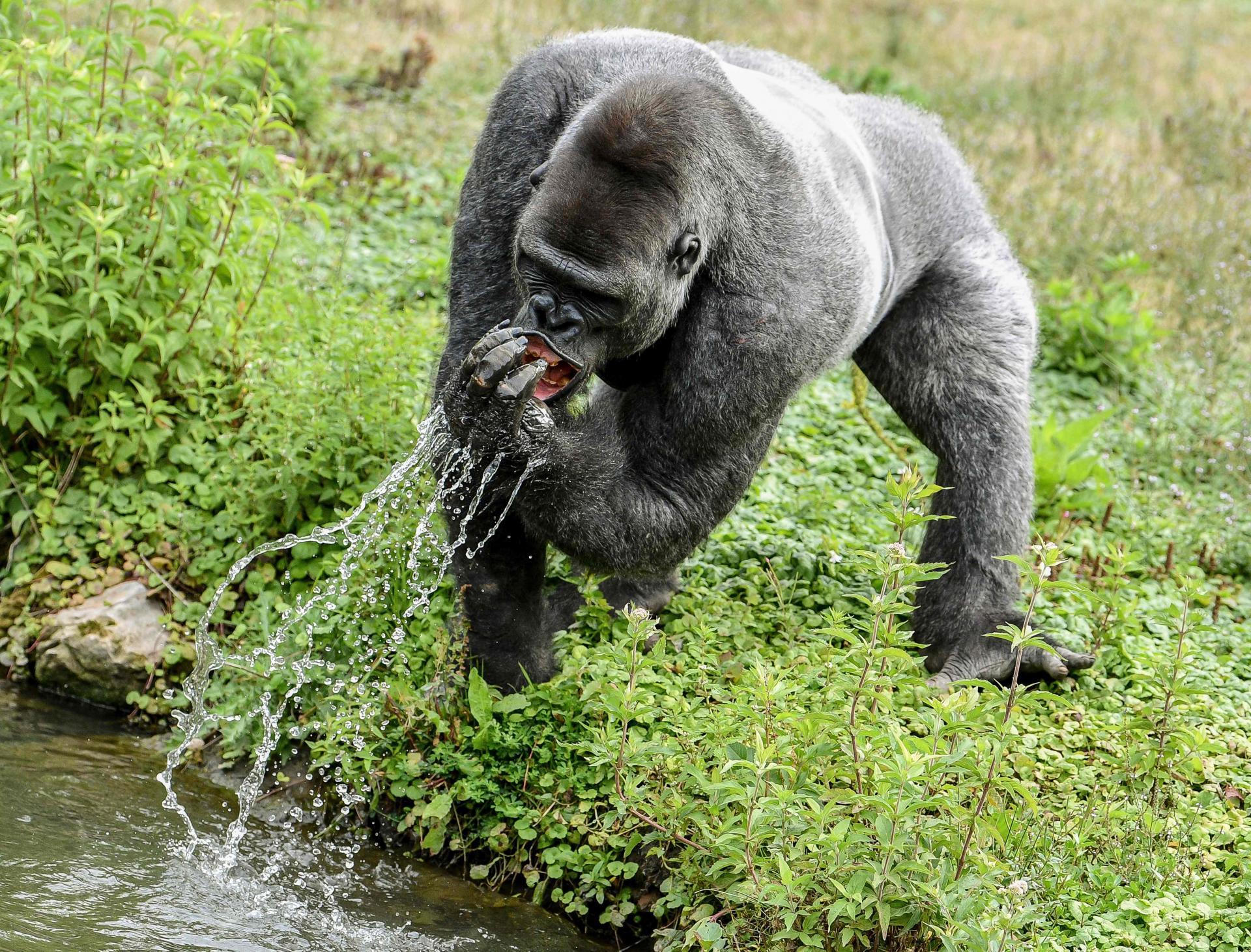 В бельгийском парке животных