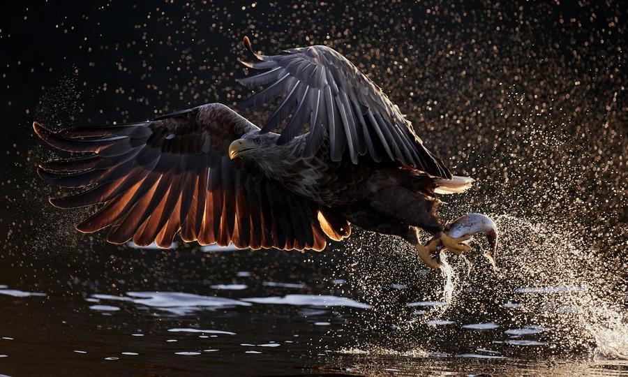 красивые фото птиц года от Bird Photographer of the Year 2019
