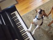 пес играет и поет