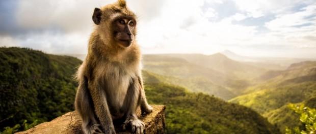Индийская обезьяна записала эко-послание для людей