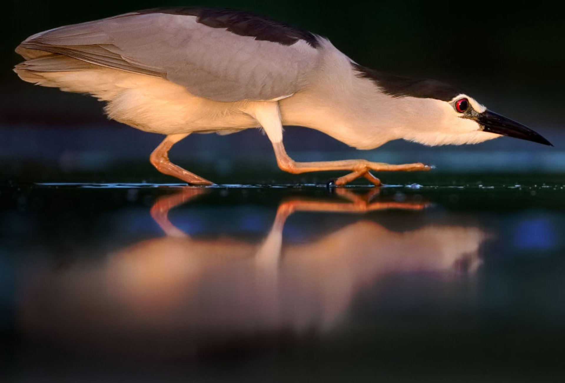 Самые красивые фото птиц года от Bird Photographer of the Year 2019