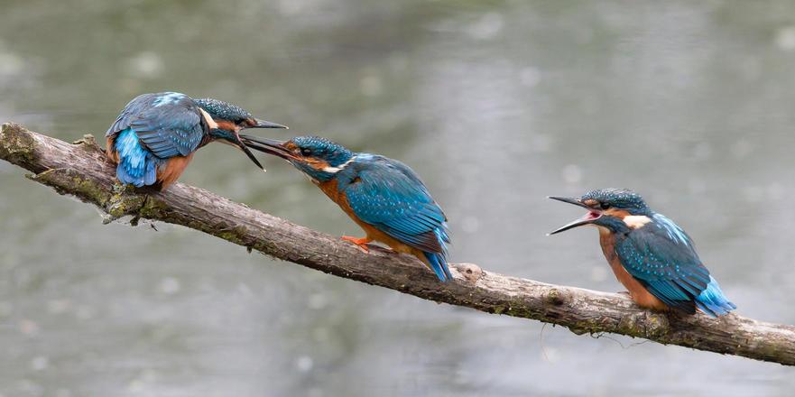 Wildlife Worldwide's Inspirational Encounters3