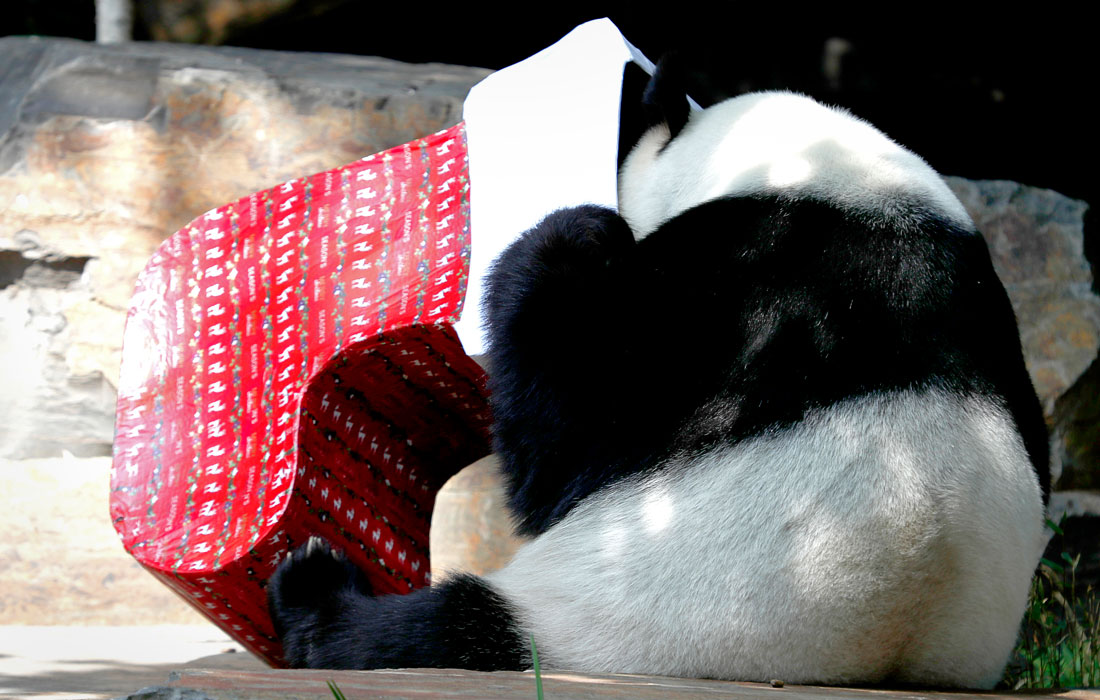 В Австралии звери уже получили рождественские подарки
