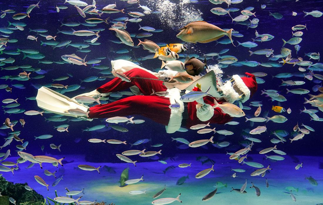 Рождественское шоу в токийском океанариуме