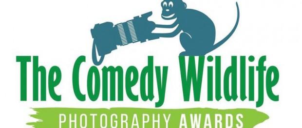 Comedy Wildlife Photography Awards подвел итоги 2019 года