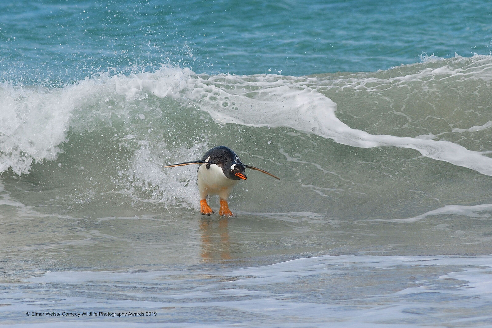 Серфингист от Comedy Wildlife