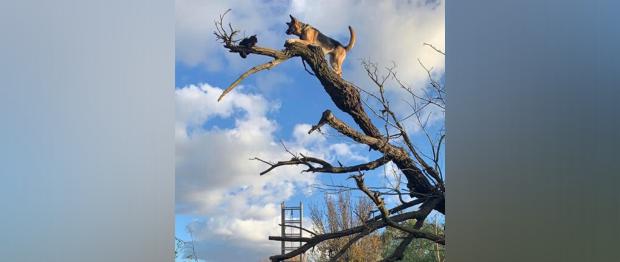 Собака так гнала кота, что сама застряла на дереве