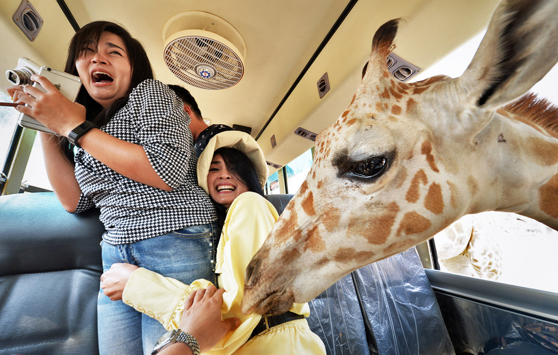 Позитивная встреча в таиландском сафари-парке