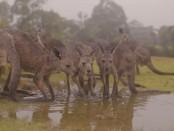 australia-rain2