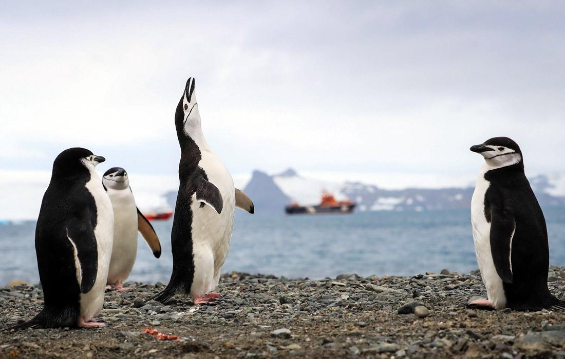 Пингвины в шоке - в Антарктиде +20