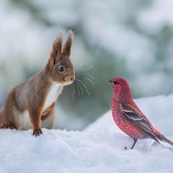 Зимние встречи