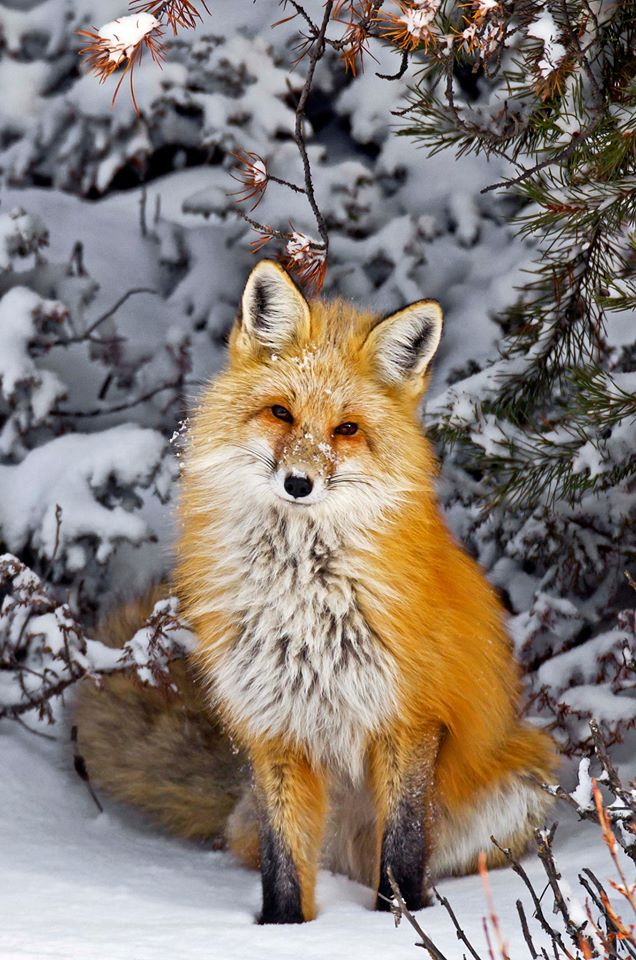 Природа - а зима еще будет?