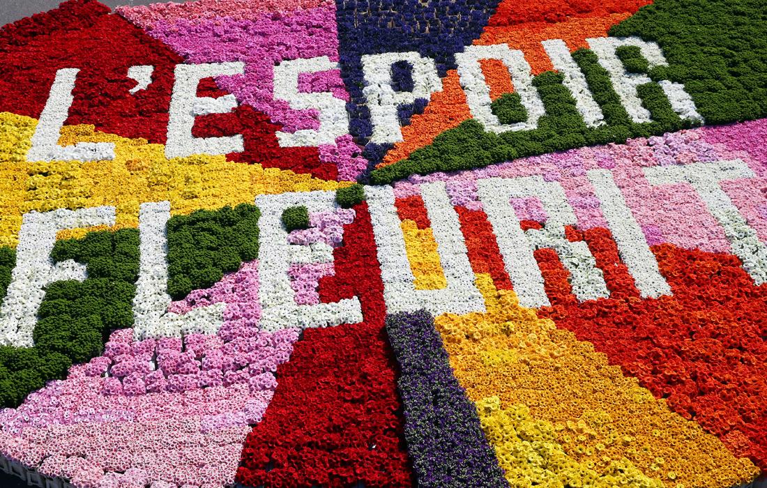 В Нидерландах все еще процветает надежда на экспорт цветов