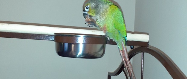 Попугай спас своих хозяев от гибели в пожаре
