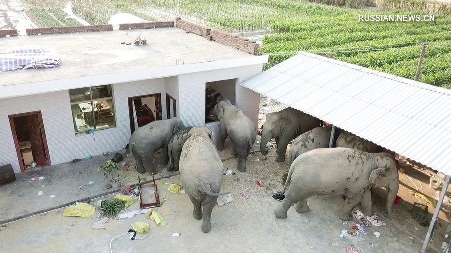 слоны алкоголики в Китае
