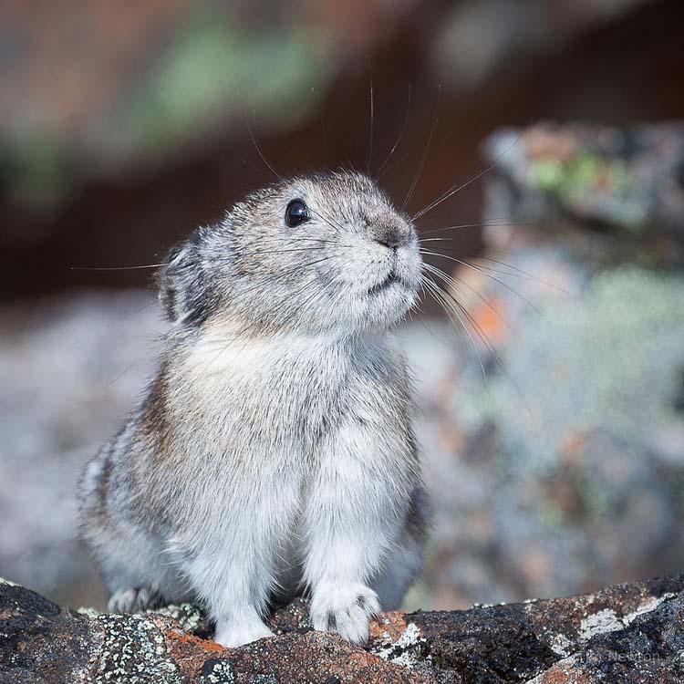 Животные Аляски глазами Тима Ньютона