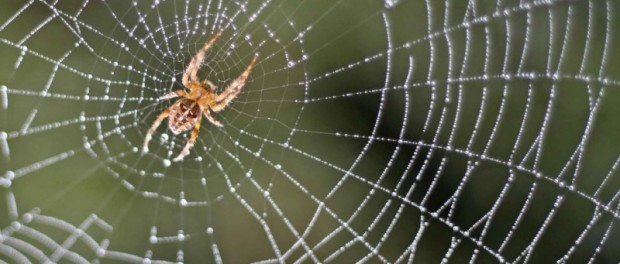 Ученые нашли новый мозг у пауков