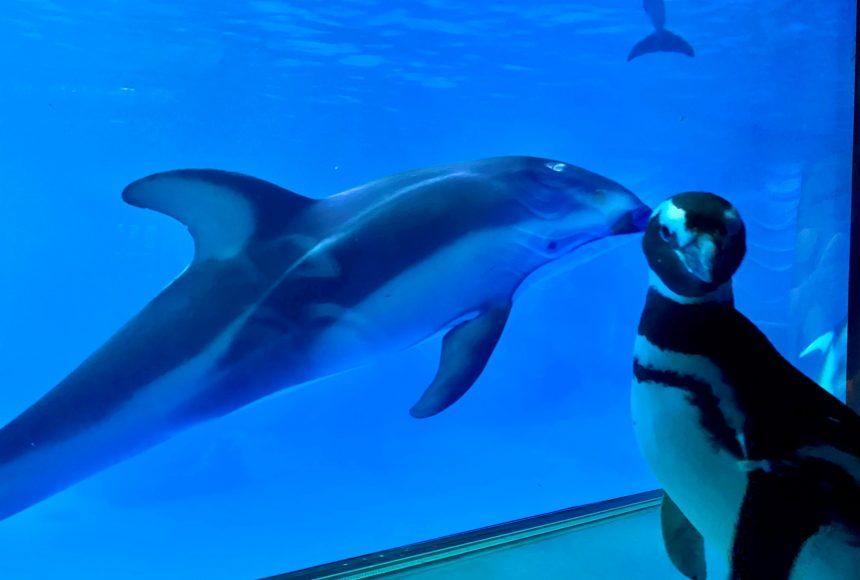 пингвины гуляют в океанариуме