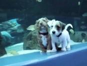 Собачья радость в океанариуме Атланты