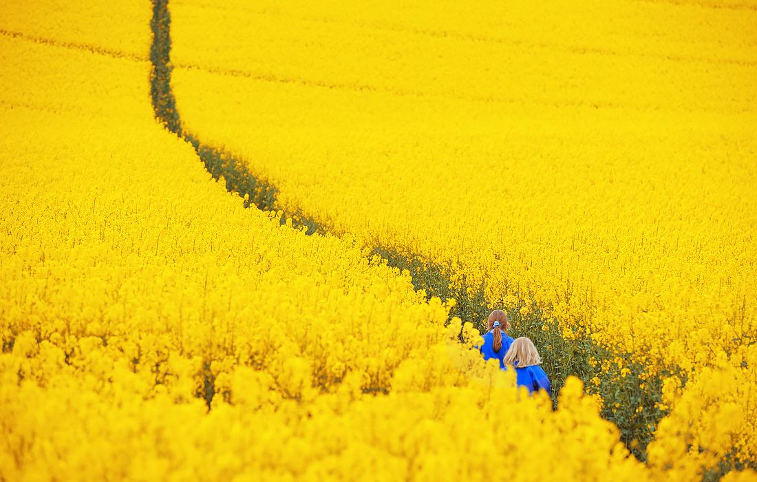 Май в желтом цвете - на поле рапса в Бриатнии