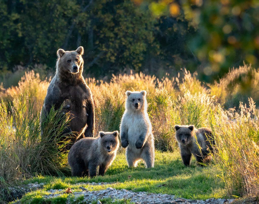 Пора совершать семейные походы в лес
