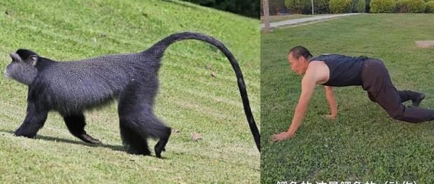 Не хочешь болеть – ходи как обезьяна