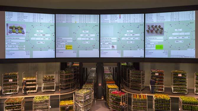 цветочная биржа в Нидерландах